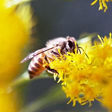 ミツバチ駆除