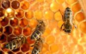 ハチの巣を 撤去してほしい