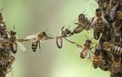 ハチを駆除して欲しい